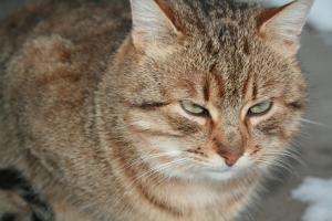 Unamused cat